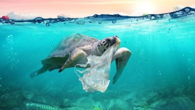 Photo of UNWTO: Tourism Sector to Continue Taking Action on Plastic Pollution